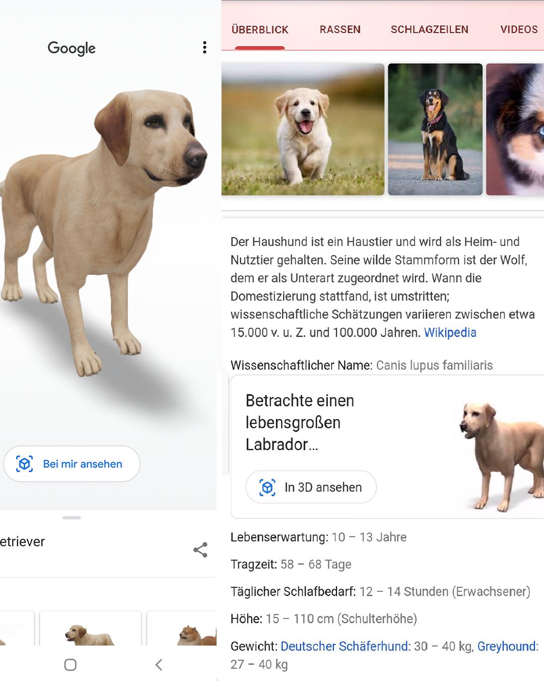Google Suchergebnis zum Begriff Hund